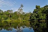 Beautiful landscape of the amazon rainforest, Yasuni National Park, Ecuador — Stock Photo