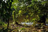 Beautiful green landscape in the amazon rainforest, Yasuni National Park, Ecuador — Stock Photo