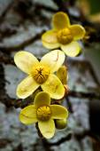 Close up shot of yellow flowers in the amazon rainforest, Ecuador — Stock Photo