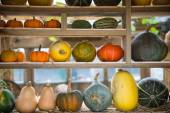 Composition of pumpkin squash and melon on natural background — Stock Photo