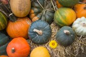 Variety of autumn harvest vegetable on natural background — Stock Photo