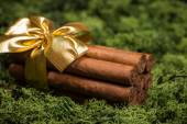 Cuban cigars gift with golden ribbon on natural moss  — Stock Photo