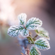 Close view on frost covered planst with cross vintage color effe — Stock Photo #61371433