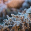 Close view on frost covered planst with cross vintage color effe — Stock Photo #61371461