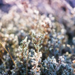 Close view on frost covered planst with cross vintage color effe — Stock Photo #61371483