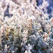 Close view on frost covered planst with cross vintage color effe — Stock Photo #61371495