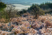 Landscaspe view over meadow in cold winter morning — Stock Photo
