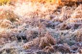 Colorful sunrise over meadow covered in frost crystals, vintage  — Stock Photo