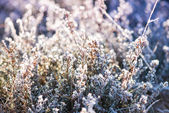 Close view on frost covered planst with cross vintage color effe — Stock Photo