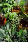 Čerstvé bylinky ze zahrady s olivovým olejem — Stock fotografie