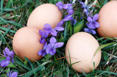 Eggs on ground — Stock Photo
