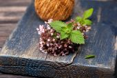 Marjoram Origanum vulgare and Mint — Stock Photo