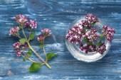 Herbs  Origanum vulgare — Stock Photo