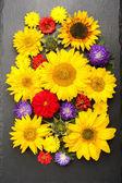 Fiori autunnali e girasoli. Priorità bassa floreale variopinta, vista dall'alto — Foto Stock