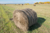 Autumn field in countryside. Haymaking time in Central Russia — Stock Photo