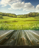 Summer pastoral background with wooden planks  — Stock Photo