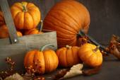 Small pumpkins with wooden box — Stok fotoğraf