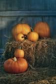 Assortment of pumpkins on hay — Stock Photo