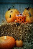 Cadılar bayramı şekeri ve kabaklar kova dolu — Stok fotoğraf