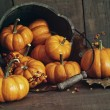 Fall still life with small pumpkins in bucket — Stock Photo #84641858