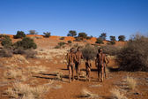 San people in native settlement — Stock Photo