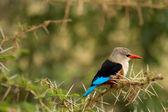 Bird at Lake Manyara National Park — Stockfoto