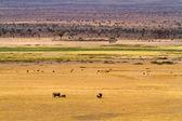 Amboseli nationalpark — Stockfoto