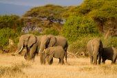 Elephants at Amboseli National Park — Stock Photo