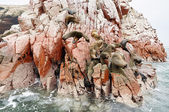 Sea lion on rocky formation Islas Ballestas, paracas — Foto de Stock