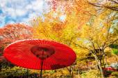 Red leaves of the maple in autumn — Stock Photo