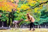Visitors feed wild deer in Nara — Stock Photo