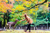 Visitors feed wild deer in Nara — Stock Photo