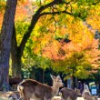 Deer near Todaiji temple in Nara, Japan — Stock Photo #53626813