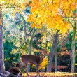 Deer near Todaiji temple in Nara, Japan — Stock Photo #53626953