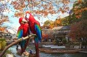 Potrait modré & zlatá papoušek — Stock fotografie
