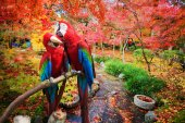 The potrait of Blue & Gold Macaw — Stock Photo