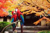 портретная синий & золотой ара — Стоковое фото