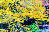 Mount Hiei — Stock Photo