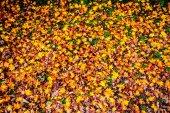 Autumn Colors in Eikando Temple, Kyoto, Kansai, Japan — Stock fotografie