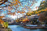 Red japanese maple autumn fall , momiji tree in kyoto japan — Foto Stock