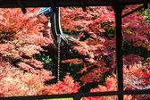 Klon kolorowy liść — Zdjęcie stockowe