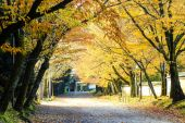 Red leaves of the maple in autumn Japan — Stock Photo