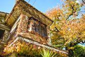 日本の秋のもみじの紅葉 — ストック写真