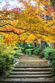 Red maple trees in a japanese garden — 图库照片