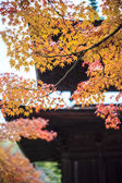 Red maple trees in a japanese garden — Stockfoto