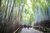 Green bamboo grove in Arashiyama — Stock Photo