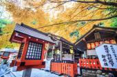 Rot-ahornbäume in einem japanischen garten — Stockfoto