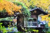 Red maple trees in a japanese garden — Zdjęcie stockowe