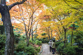 Red maple trees in a japanese garden — ストック写真
