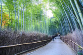 Kyoto, Japan - green bamboo grove in Arashiyama — Stock Photo